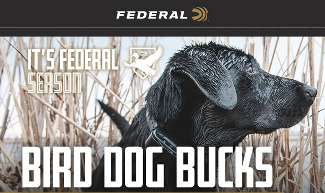 Its Federal Season Bird Dog Bucks